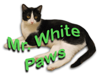 Mr. White Paws
